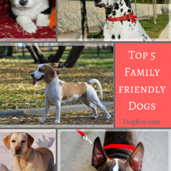 family pet dogs