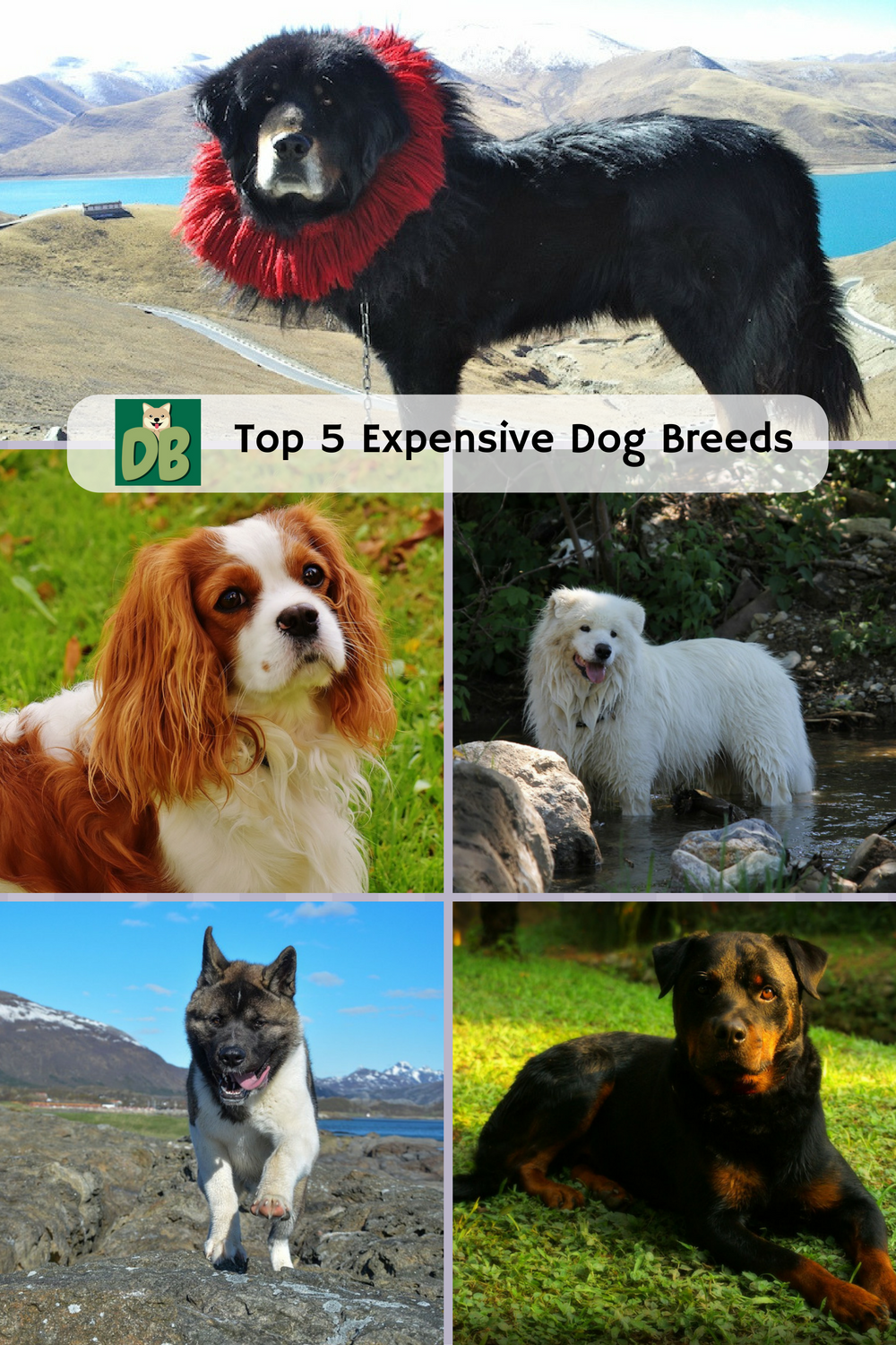 expensive dogs